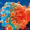 研究表明干扰素-γ如何指导对癌症免疫疗法的反应