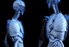 骨骼由于热量和微生物而更坚固