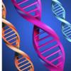 探索基因表达的性别差异