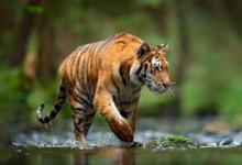 病毒在哺乳动物的繁殖和生存能力中起关键的进化作用