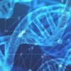 研究表明人类基因组中普遍存在表观遗传缺陷