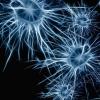 研究人员发现脊髓损伤后神经元再生的新途径