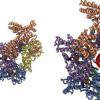 复制基因组始于曲折 捏和一点点舞蹈