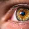 食物链中的废物可能为全球治疗眼部感染提供线索