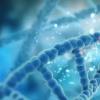 DNA损伤可能发生在远离辐射入射点的地方