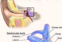 研究称 使用阿片类药物可导致部分或全部耳聋