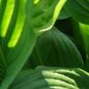 外来入侵植物通过次生化学反应之间的权衡来适应环境
