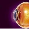 研究显示患有视网膜退行性疾病的人如何保持夜视力