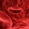研究人员设计了一种新型抗体 该抗体可抑制一种特殊的血源蛋白