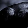 研究人员深入了解鸟类大脑的结构