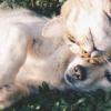 一项新的研究表明 宠物与保持更好的心理健康和减少锁定期间的孤独感有关