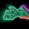 研究人员解决了巨大的分子质子泵如何工作的谜