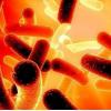 研究人员发现了一种细小病毒达到细胞核的新策略