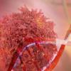 高复杂度流式细胞术的挑战