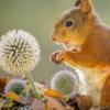 研究人员开发了预测动物感知行为的新理论