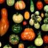 对野生番茄的分析阐明了果实性状的遗传基础
