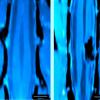脊髓损伤中的神经元通过碳纳米管海绵在体内重新连接