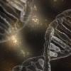 炎症基因因为肥胖风险提供线索