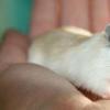 膳食纤维抗感染作用的新机制