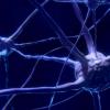 发现小胶质细胞作为大脑神经元调节剂的新作用