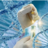 作用于细胞的力的方向和类型可以改变基因表达
