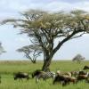 研究提供了对热带稀树草原物种丰富度的更好理解