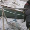 研究人员发现北极海豹中的汞含量稳定