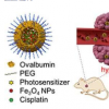 在一个纳米胶囊中使用两种细胞杀伤剂系统进行协同抗癌治疗