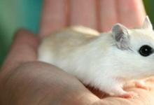 临床前研究显示 较高剂量的维生素D可以减缓衰老小鼠的脆弱发展