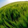 使用生物聚合物芯片控制肥料的释放