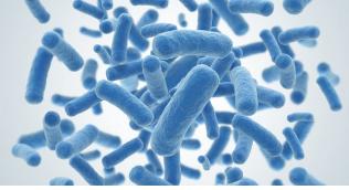恒达平台官网动态图揭示了细胞如何抵抗微生物并保存记忆以备将来感染