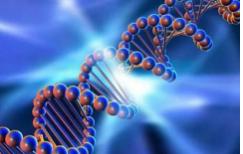 恒达平台官网由黄蜂毒液中的有毒蛋白质改造而成的强大抗菌分子