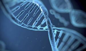 恒达平台官网调节大脑中多巴胺水平的基因变异可能会影响年老体弱的成年人的活动能力