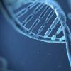 调节大脑中多巴胺水平的基因变异可能会影响年老体弱的成年人的活动能力