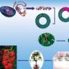 植物基因工程可持续解决微量营养素营养不良