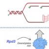 研究中新表征的癌症相关酶机制