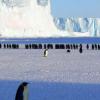 南极洲冰量损失可能会继续