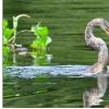 保护区帮助水鸟适应气候变化