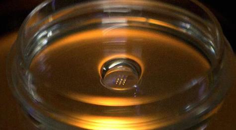 实验室测试显示在胚胎上使用CRISPR基因编辑的风险