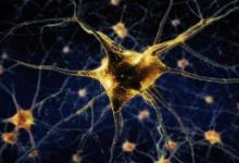 功能和病理改变的神经细胞的超分辨率图像