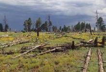 研究揭示了影响野火后森林恢复的模式