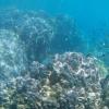 将环境基因组学应用于珊瑚保护