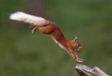 哺乳动物中的转录组和翻译组共同进化