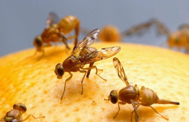 研究发现糖能重塑果蝇的分子记忆