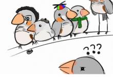 斑马雀的发声方式能够记忆多达42只鸟