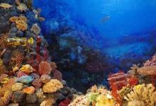 夜间的光污染严重破坏了珊瑚的繁殖周期