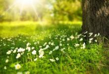 研究人员量化内华达山脉草甸土壤的碳变化