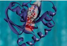 新的蛋白质成像方法为下一代生物材料和组织分析铺平道路