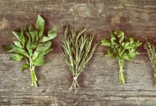 植物性抗菌剂为合成抗生素提供了有效的替代品