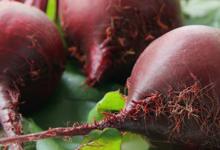 研究发现甜菜可以可以增强人体系统并影响血压和认知功能